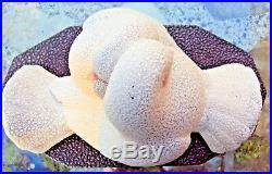 Deux colombes art déco en céramique perlées de sèvres